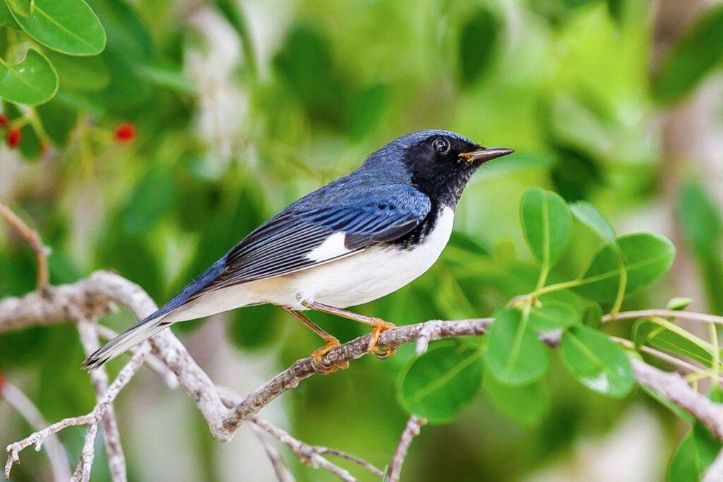 Datele statistice din ultimii 50 de ani arată noi schimbări în migrația păsărilor