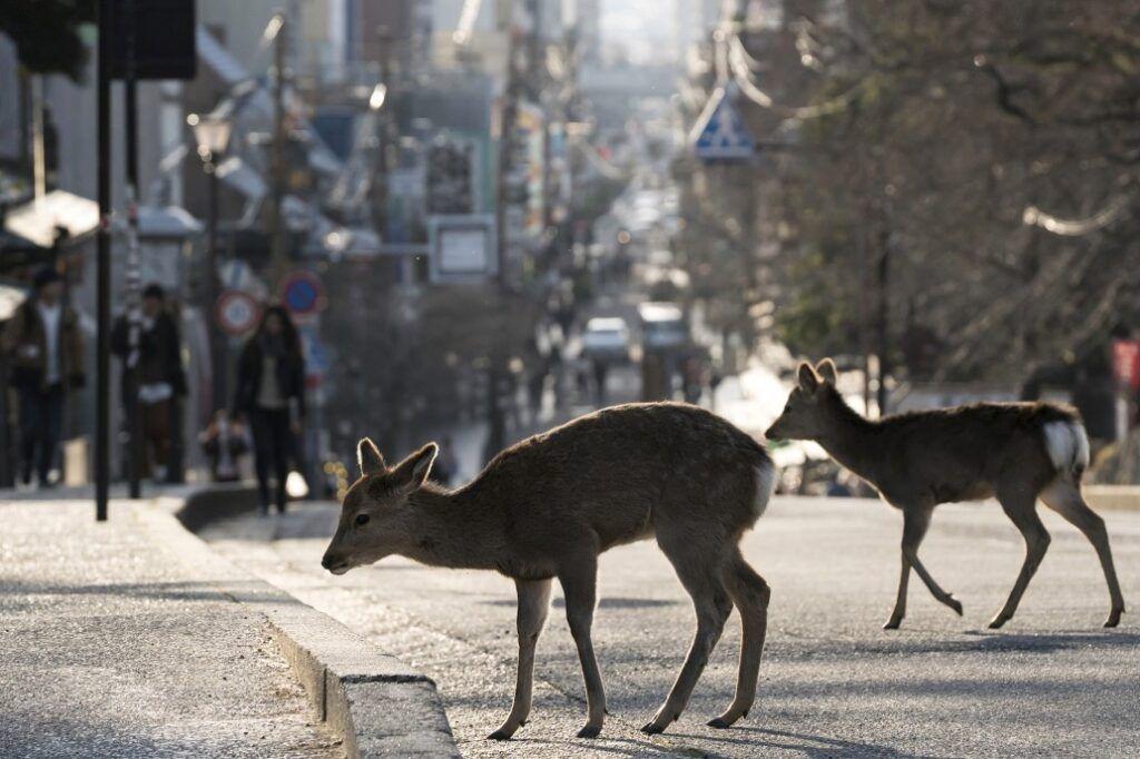 Lipsa oamenilor de pe străzile orașelor cauzată de carantină, afectează peisajul urban.