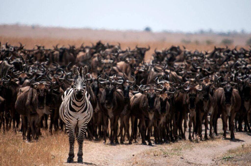 A fost înregistrată o deplasare în masă a animalelor din cauza schimbărilor climatice