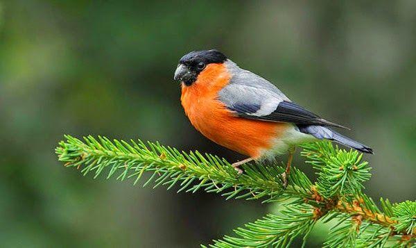 Schimbările climatice au redus arealul de reproducție de vară a speciilor de păsări migratoare