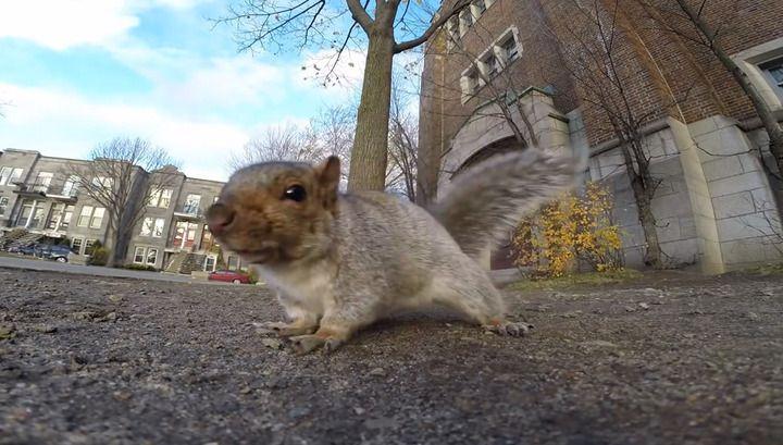 O veveriță a furat un GoPro și a urcat într-un copac. (Video)