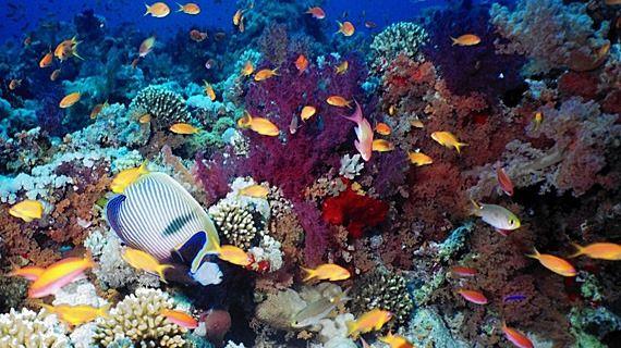 """""""Vom rămâne fără pește"""": oamenii de știință prevăd extincția majorității speciilor de pești până în anul 2048"""
