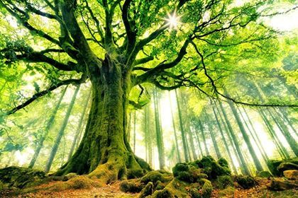 Declarație ONU:  În 30 de ani pe Pământ, pădurile au dispărut pe o suprafață de dimensiunea Libiei