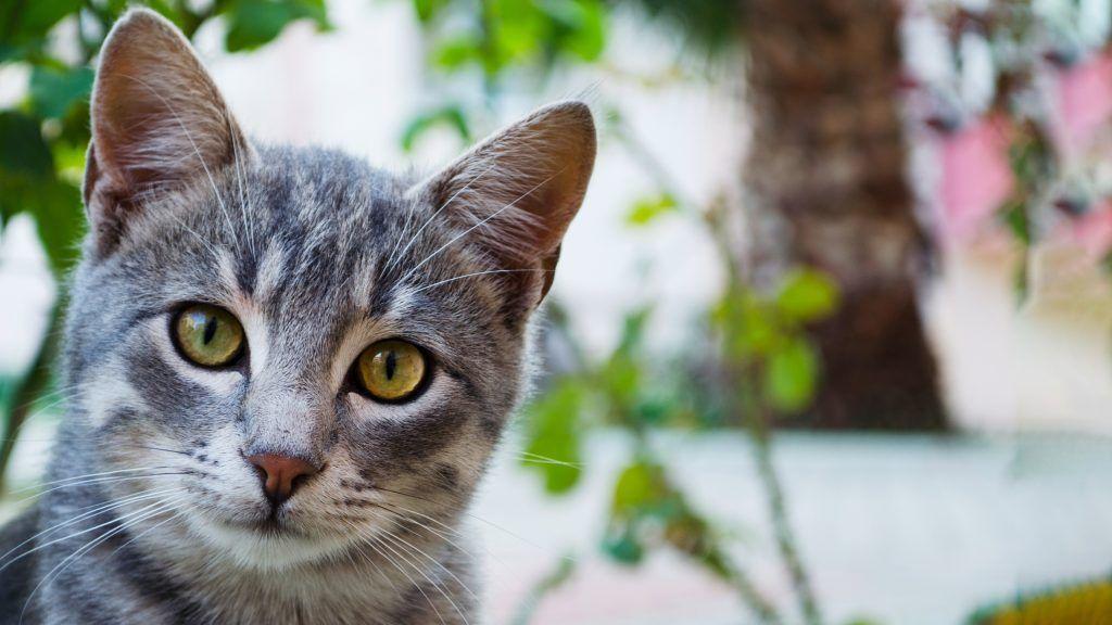 O pisică fără stăpân a salvat un copil de la un câine agresiv (video)