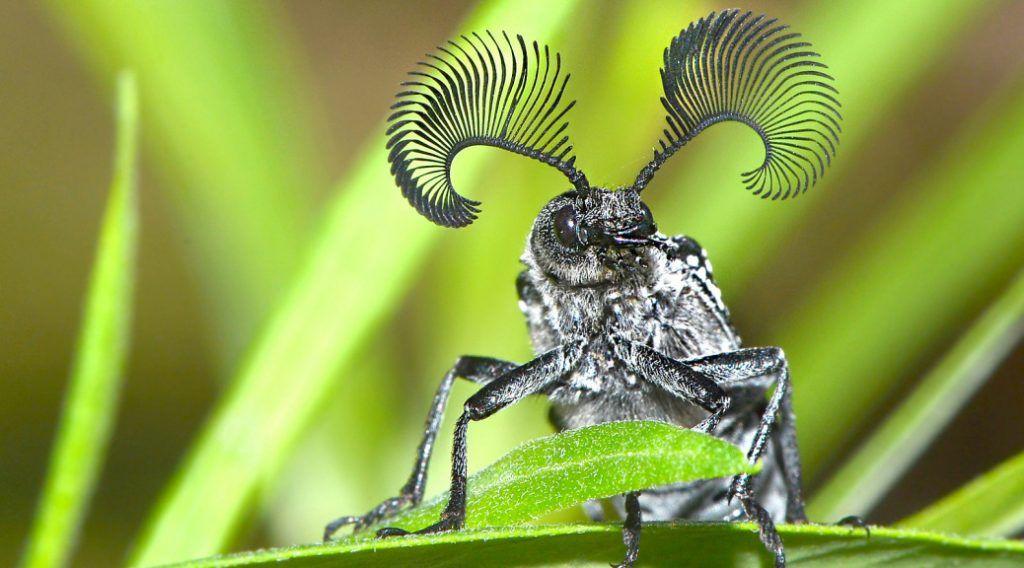 Pământul pierde anual până la 2% din insecte