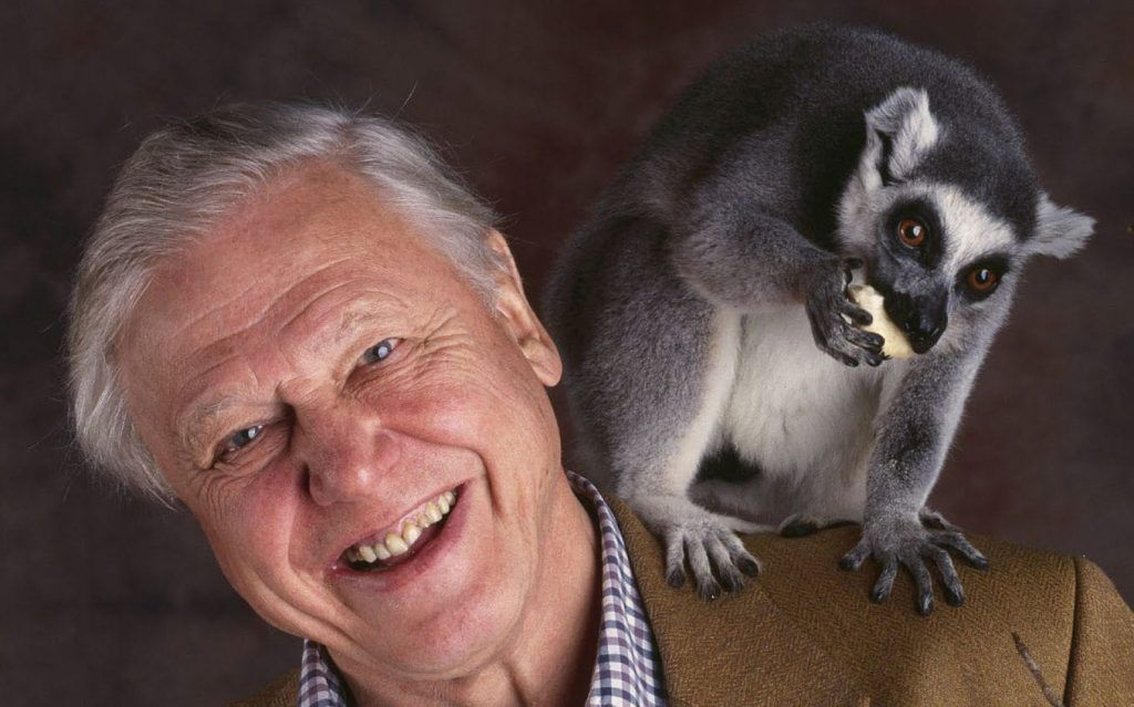 David Attenborough: Schimbările climatice reprezintă o amenințare la adresa securității globale
